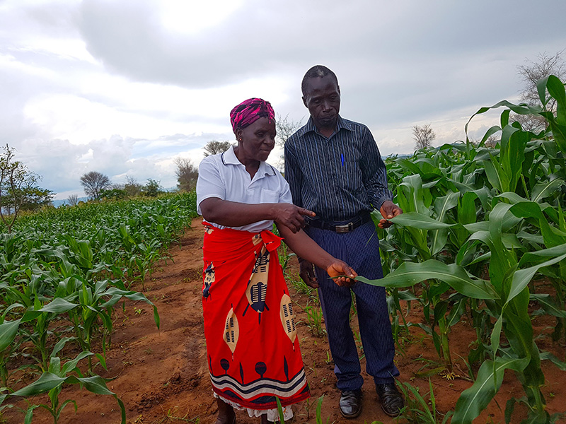 Mr Alex Chingoli and his wife at the farm