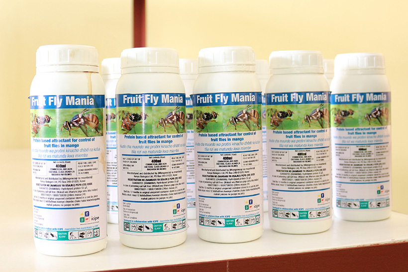 Fruit fly bait production facility launched in Kenya | icipe